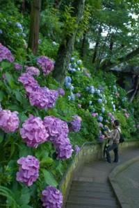 長谷寺の境内