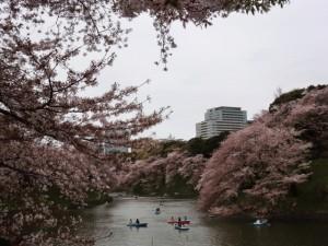 千鳥ケ淵と桜