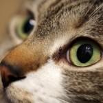 猫を喜ばせる方法の研究結果から知ってしまった事実