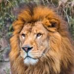 動物園の動物の価格にびっくり! コアラは無料、ゴリラは8000万円