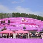 北海道で5月に見ごろを迎える花の名所・スポット
