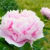 北海道で6月に見ごろを迎える花の名所・スポット