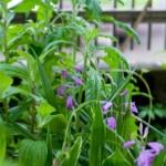 庭の雑草取りを楽にした~い! 除草剤を使わない雑草除去アイテム