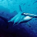 茨城県の海水浴場、サメや台風で遊泳禁止や解禁に(8月15日)