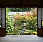 【雲龍院】紅葉の見ごろとライトアップ!心洗われる禅の庭の紅葉