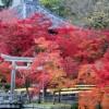 【永観堂】紅葉の見ごろとライトアップ!3000本の紅葉の名所