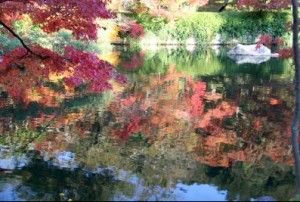 永観堂の放生池