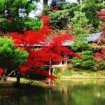 【高台寺】紅葉の見ごろとライトアップ!東山を借景とした美庭