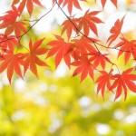 関東の紅葉、10月中旬から楽しめる名所スポット