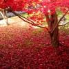 京都の紅葉2015おすすめ【東福寺周辺】穴場スポット情報も
