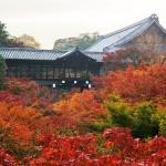 【東福寺】紅葉の見ごろとライトアップ!紅葉の赤い雲海が絶景
